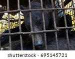 brown bear  ursus arctos ... | Shutterstock . vector #695145721