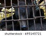 brown bear  ursus arctos ... | Shutterstock . vector #695145721
