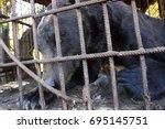 brown bear   | Shutterstock . vector #695145751