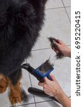 Small photo of Dog, hands with slicker brush. Hair of bernese mountain dog.