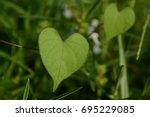 Leaves Love