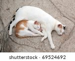 Stock photo cat and kitten it is sweet sleep 69524692