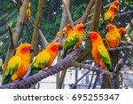 many parrots stand very... | Shutterstock . vector #695255347