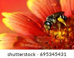 the bee collects pollen and... | Shutterstock . vector #695345431