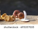 chanterelle mushrooms on rustic ...   Shutterstock . vector #695357035