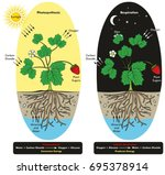 photosynthesis and cellular... | Shutterstock . vector #695378914