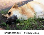 stray dog feeling unwell and... | Shutterstock . vector #695392819