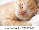 Stock photo cute sleeping kitten cat closeup 69539446