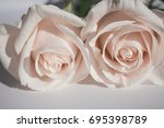 rose. two white roses. elegant... | Shutterstock . vector #695398789