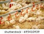 indoors chicken farm  chicken... | Shutterstock . vector #695410939
