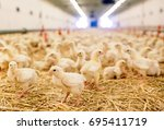 indoors chicken farm  chicken... | Shutterstock . vector #695411719