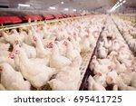 indoors chicken farm  chicken... | Shutterstock . vector #695411725