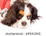 photo of a cavalier king... | Shutterstock . vector #69541543