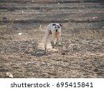 dalmatian running   Shutterstock . vector #695415841