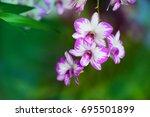 beautiful orchid  flowers  in... | Shutterstock . vector #695501899