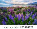 focus blended lake tekapo lupin ... | Shutterstock . vector #695528191