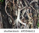 entangled root of old tree | Shutterstock . vector #695546611