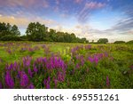 Summer in the meadow, flowering flowers
