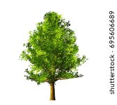 tree isolated on white... | Shutterstock . vector #695606689