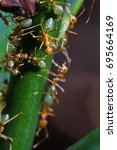 Small photo of leaf cutter ants