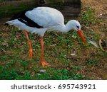 stork | Shutterstock . vector #695743921