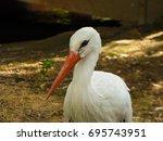stork | Shutterstock . vector #695743951