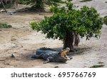 crocodile saltwater thailand | Shutterstock . vector #695766769