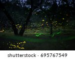 firefly flying in the forest.... | Shutterstock . vector #695767549