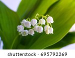 blossoming lily of the valley....