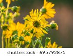 One Yellow Wildflower Facing A...