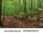 Forest In The National Parc Of...
