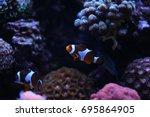 popular saltwater fish in... | Shutterstock . vector #695864905