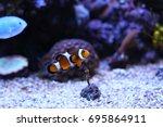popular saltwater fish in... | Shutterstock . vector #695864911