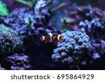 popular saltwater fish in... | Shutterstock . vector #695864929