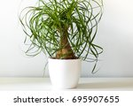 Green Houseplant In White Vase