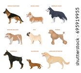 dog breeds set. illustration of ... | Shutterstock .eps vector #695919955