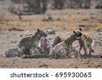 spotted hyena in kruger... | Shutterstock . vector #695930065