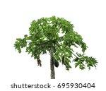 papaya tree white background | Shutterstock . vector #695930404