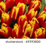 Close-up of closely bundled red tulips / pattern - stock photo
