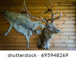 Mounted Stag Head On Cabin Wal...