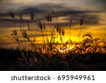 beautiful nature of sunset... | Shutterstock . vector #695949961