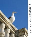 Seagull On A Balustrade