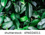 the green leaves are tightly... | Shutterstock . vector #696026011