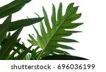 green leaves frame of monstera... | Shutterstock . vector #696036199