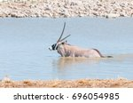 an oryx  also called gemsbok ... | Shutterstock . vector #696054985
