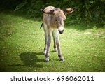 Baby Donkey On Grass In New...