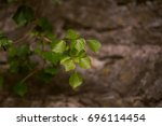 green plant on the stone wall | Shutterstock . vector #696114454