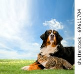 Dog and cat together on grass, sunny spring day and blue sky. - stock photo