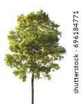 isolate tree green leaves on... | Shutterstock . vector #696184771