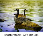 Two Geese In A Lake Swimming I...